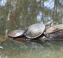 Macquarie Turtle by EnviroKey