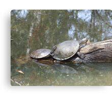 Macquarie Turtle Canvas Print