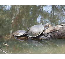 Macquarie Turtle Photographic Print