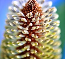 Candlestick Banksia by Renee Hubbard Fine Art Photography