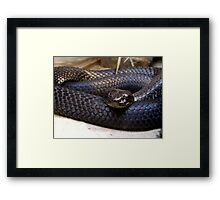 Tiger Snake - 'Chappell Island Form' Framed Print