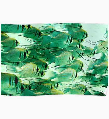 Fish School Poster