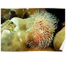 White Christmas Tree Worms Poster