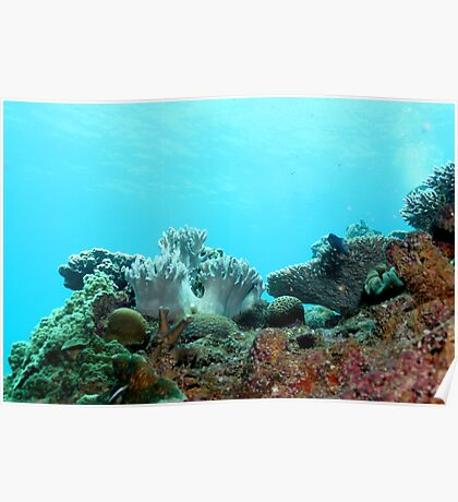 Corals Poster