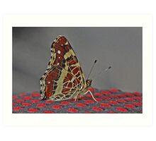 Map butterfly Art Print