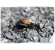 Asphalt Bug Poster