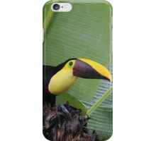 Chestnut-Mandibled Toucan iPhone Case/Skin
