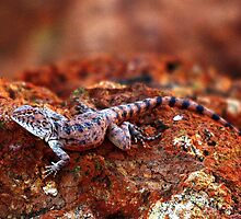 Ring-tailed Dragon by EnviroKey