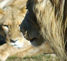 Werribee Open Range Zoo Series by Wzard