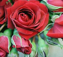 Romantic Red Roses by tanjica