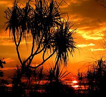 Pandanus sunset by Noeline R