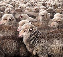 I Am Ewe by Paula McManus