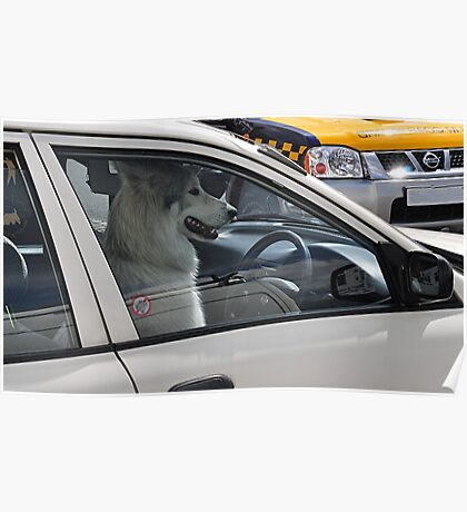 Pooch  Mobile - Volvo Driver ? Poster