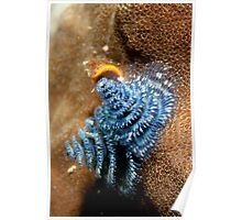 Blue Christmas Tree Worms Poster
