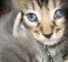 Kittens Keep A Secret Sticker