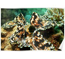 Spotted Giant Clam Poster