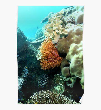 Orange Fan Coral Poster