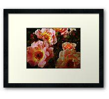 Vintage Roses. Framed Print