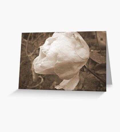 Battered Rose Greeting Card