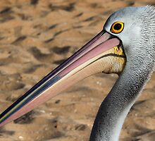 Pelican by John Marriott