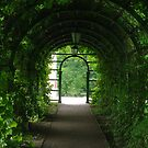 Green tunnel  by Bluesrose