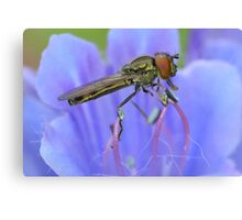 Hoverfly Profile Canvas Print