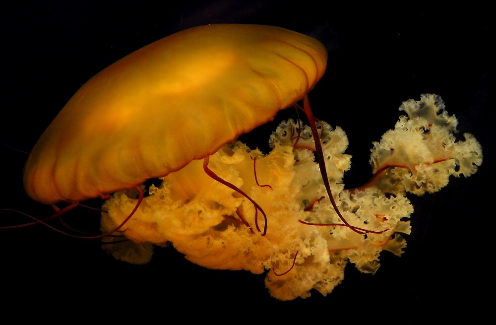 Tennessee Jelly Fish by Marylee Pope