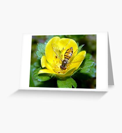 Hoverfly in Flower Greeting Card