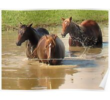"""""""Horses with Attitude no. 5, 'Hey...Youse Guys, I'm Still Talkin'""""... prints and products        Poster"""
