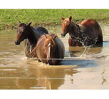 """""""Horses with Attitude no. 5, 'Hey...Youse Guys, I'm Still Talkin'""""... prints and products        Photographic Print"""
