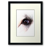 Eye of Dog Framed Print