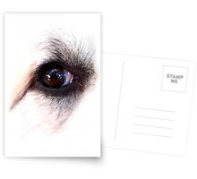 Eye of Dog Postcards