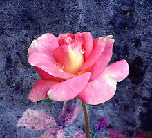 Rosy Greetings by Sheryl Kasper