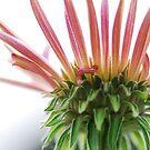 Flower by spouti