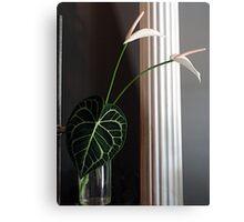 Lily Leaf Metal Print