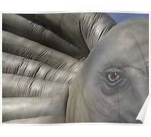 Elephant close-up - Ear and eye Poster