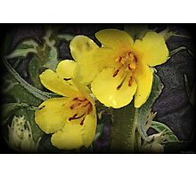 Shaded Color Photographic Print