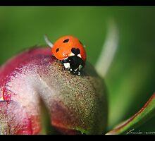 Ladybug by lvangend