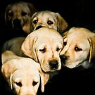 Puppies  by Nancy Stafford