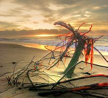 Orange Branch on Sunrise, 2 by Tyhe  Reading