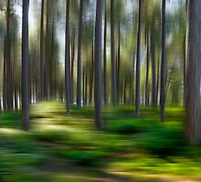 Pinewoods at Ainsdale, UK by Dave McAleavy