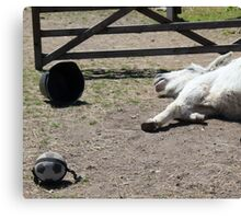 Have you celebrated a bit too much Laurie? Canvas Print