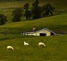 Scottish Hills by melitta
