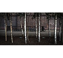 Bicycles & Silver Birch Photographic Print