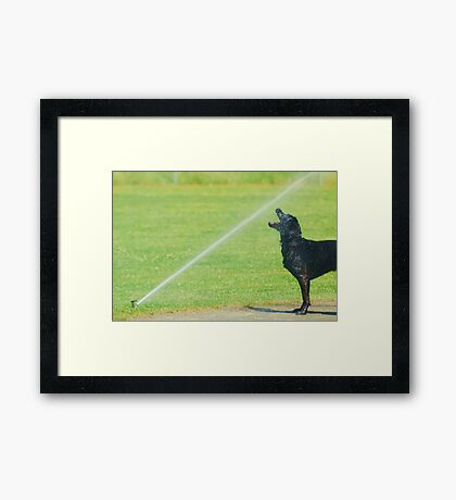Hit Me with your Best Shot! Framed Print