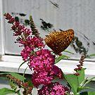 Butterfly by MegJay