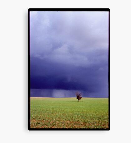 Coming Rain, Mallee Canvas Print