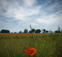 Poppyfield by Nigel Bangert