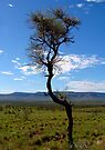 Kimberley country by Paige