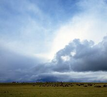 Coming Rain, Mallee 2 by Ty  Mickan